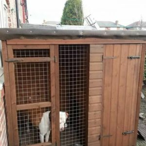 postadsuk.com-1-large-dog-kennel-and-run-for-sale-600x600